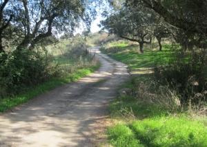 AVE Extremadura Grimaldo001-2