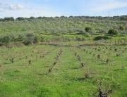 AVE Extremadura Plasencia010